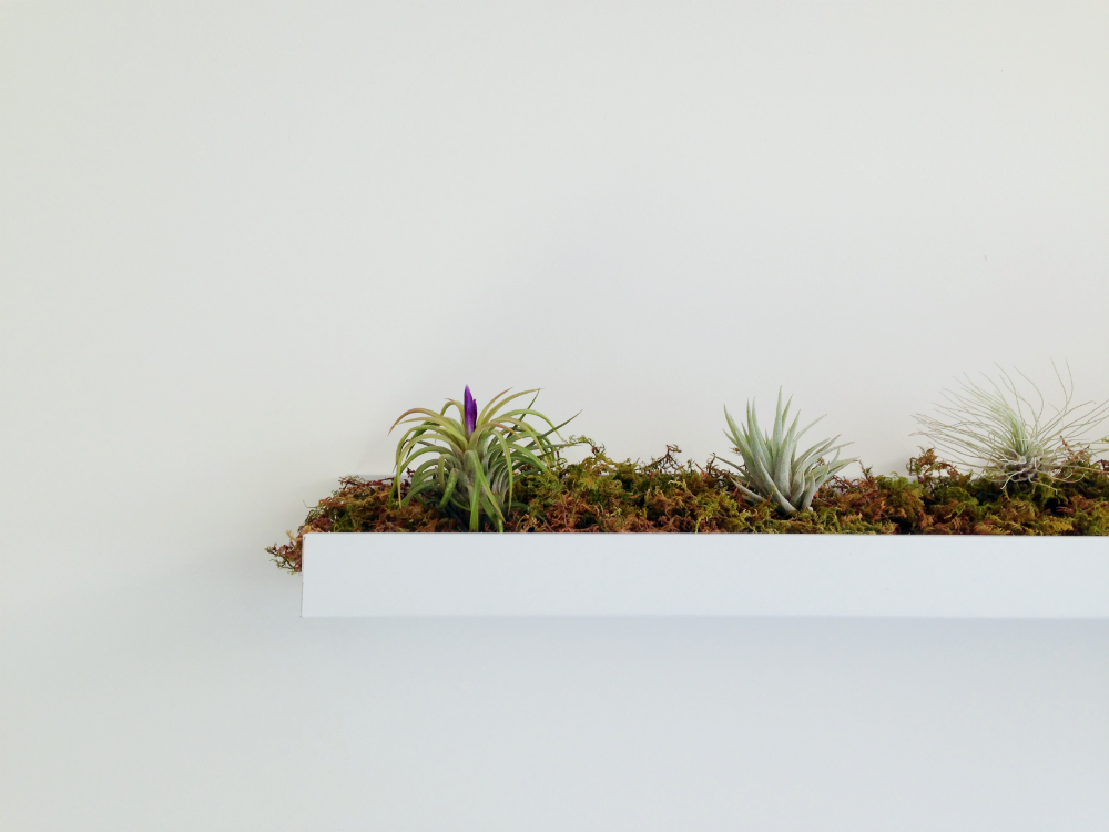 Weekend whimsy ikea hack for air plants a spoonful of - Estantes para plantas ...