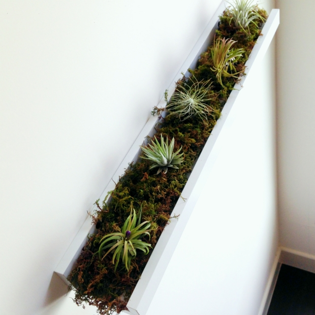 ribba_airplants