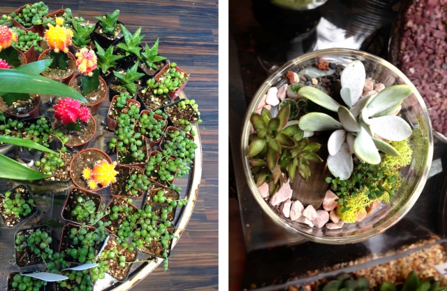 succulencecollage1