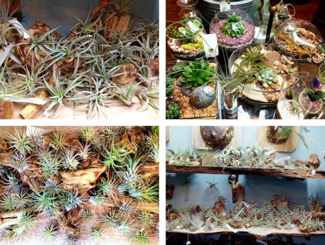 succulencecollage3